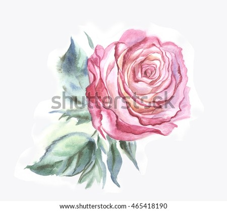 White-pink rose. Watercolor painting.