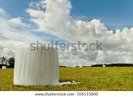 White plastic hay bales on land.