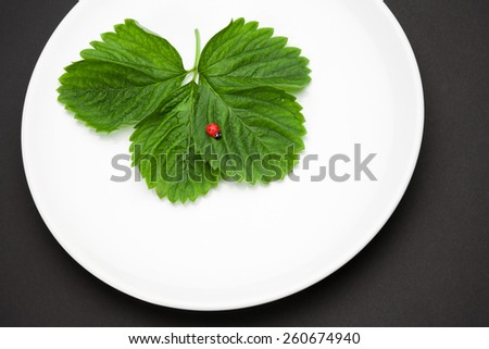 White plate with leaves and toy ladybird - stock photo