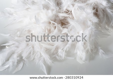 White plumage cloce up - stock photo