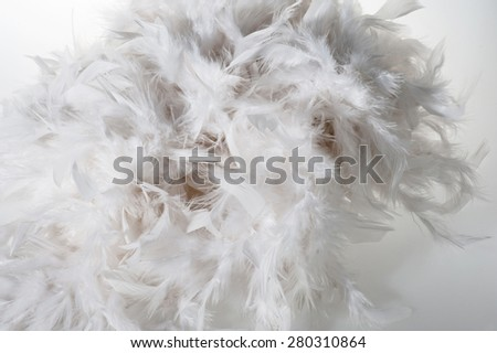 White plumage close up - stock photo