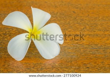 white plumeria flower on teak table - stock photo