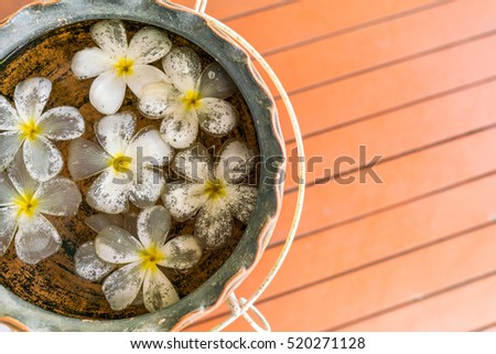 White Plumeria on water in Pottery basin with wooden floor copy space. Top view of beautiful white flower for decorative background.