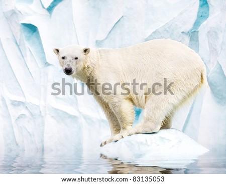 White polar bear against snow mountain - stock photo