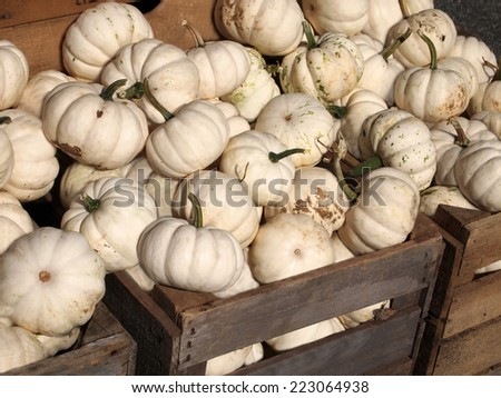 White pumpkins piled into wooden crates in the the sunshine on an October day. - stock photo