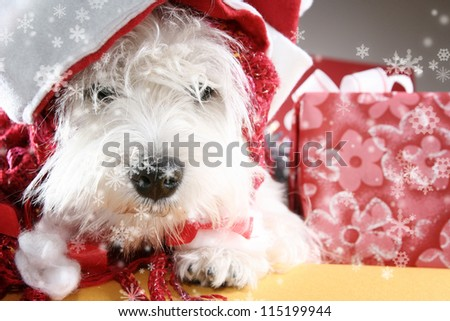 White puppy dressed in santa claus costume. - stock photo