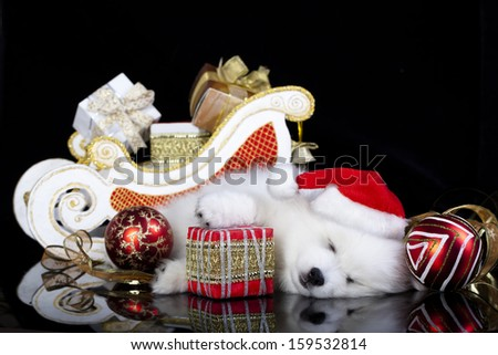 white puppy sleeping with a gift in paws - stock photo