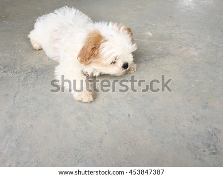 white puppy with brown ear is cute