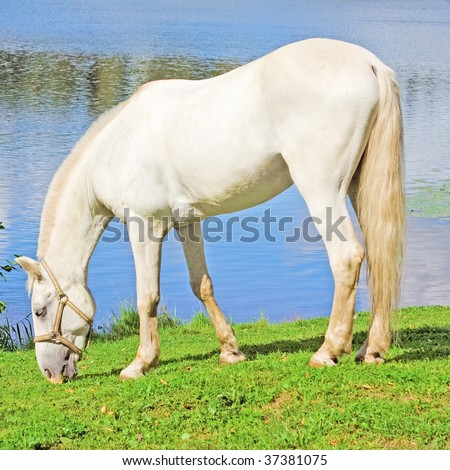 White Pure Animal Grace - stock photo