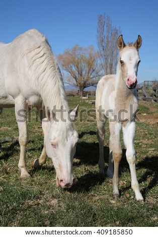 white quarter horse and foal standing in a grassy field