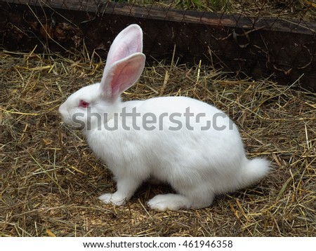 2ac9735643f White rabbit tail with stainless steel twist gold plug - TRYFM.COM