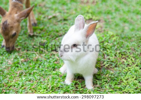 White rabbit in the garden