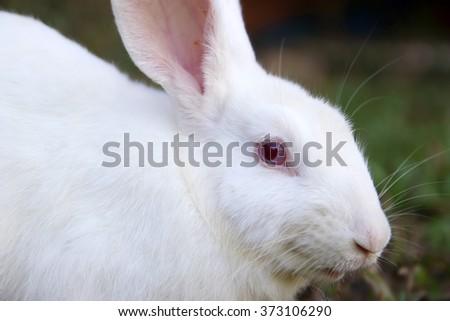 White rabbit on green grass - stock photo