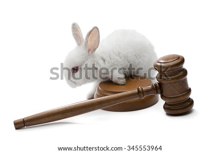 White rabbit on judge gavel isolated on white background - Animal protection laws concept. - stock photo