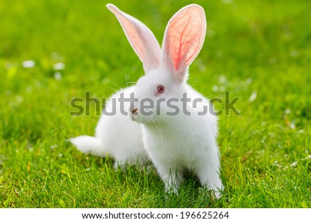 White rabbit sitting in green grass - stock photo