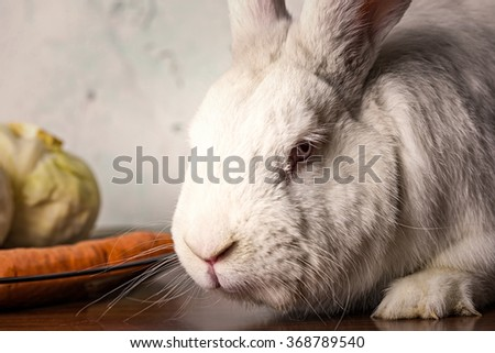 white rabbit sitting on a table. Image close-up.
