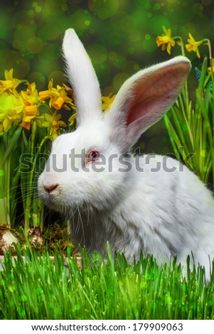 White rabbit whit red eye, spring flowers on background