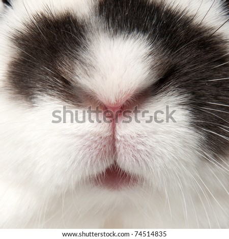 white rabbit with blask spots - stock photo