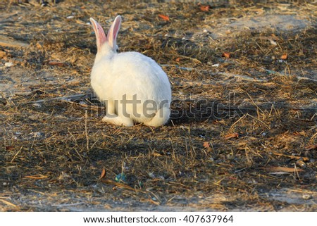White rabbit with fluffy tail sitting back - stock photo
