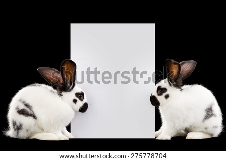 White rabbits with a sheet for text - stock photo