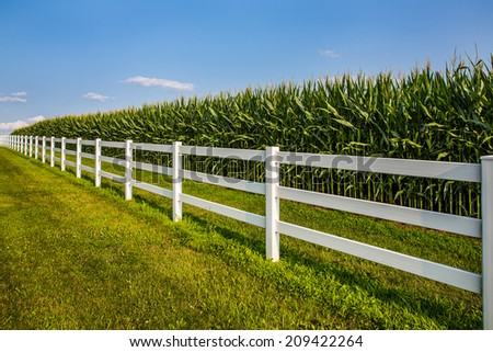 White rail fence leading along cornfield and deep blue sky. - stock photo