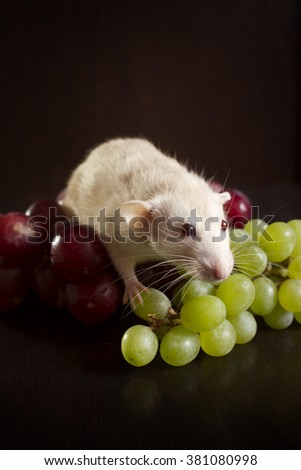 White rat with green and purple grapes