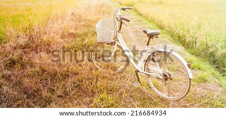 White retro bicycle with rice field in the evening
