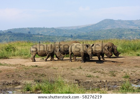 White Rhino at the Hluhluwe National Park in South Africa - stock photo