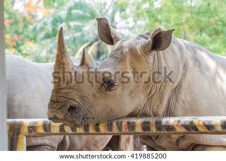 White rhino close up - stock photo