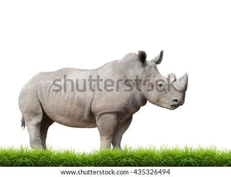white rhinoceros, square-lipped rhinoceros with green grass isolated on white background