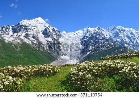 White rhododendron bushes against the glacier and snow capped cliffs