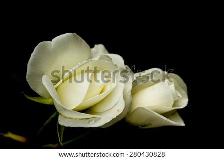 White romance - stock photo
