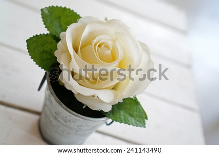 White rose in aluminum pots (Nature Background)