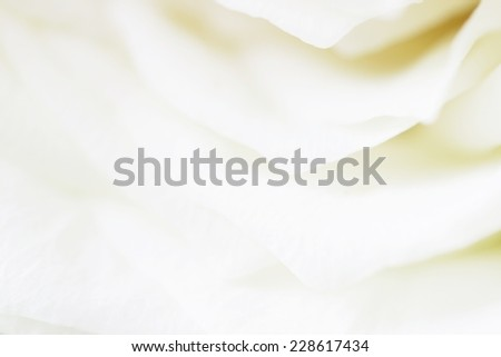White Rose petals  - stock photo