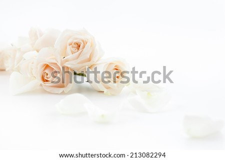 white roses and petals lying down on a white surface. Selective focus. - stock photo