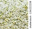 White roses and white orchids background - stock photo