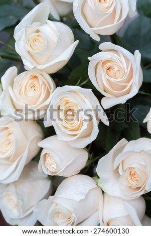 white roses as a floral background - stock photo