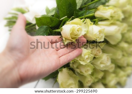 White roses bouquet lying on a white wooden table, Hand holding a bud  - stock photo