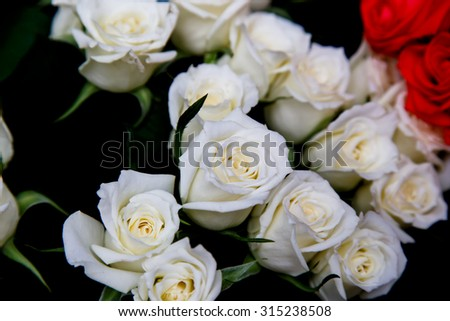 white roses closeup detail background