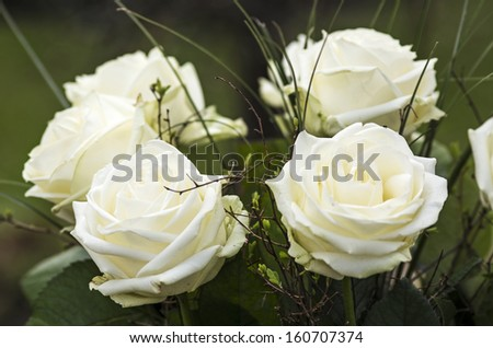 White roses on green