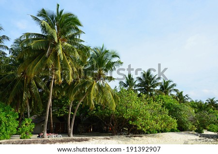 White sand beach with green coconut palm