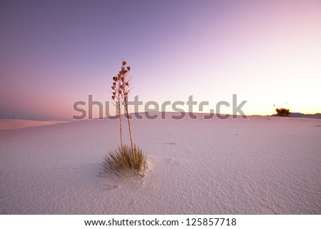 White Sands Park in USA - stock photo