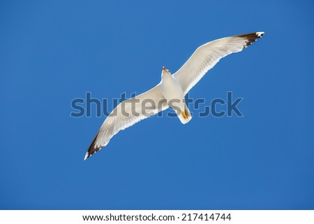 White sea gull flying in the blue sunny sky - stock photo