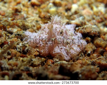 White sea slug on sand - stock photo