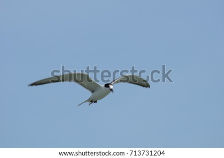 White Seagull Fly over the sky