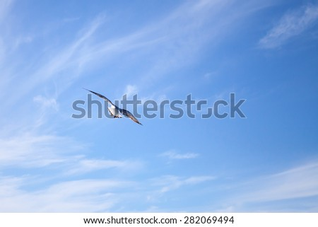 White seagull flying away on blue sky background with windy clouds - stock photo