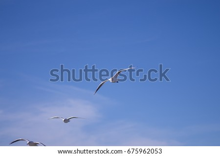 White seagull flying in the blue sky.