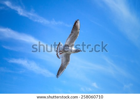 White seagull flying on blue sky background with windy clouds - stock photo