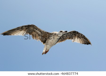 white seagull in blue sky