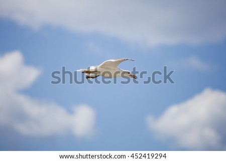White seagull on blue cloudy sky. Bottom view - stock photo
